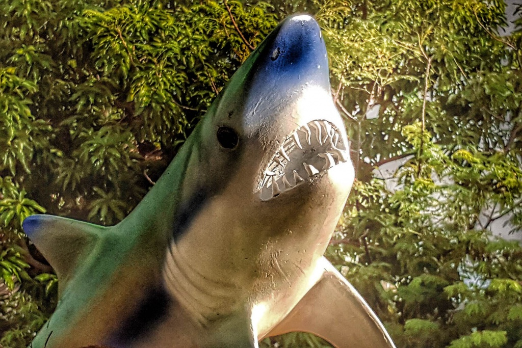 Google è uno squalo